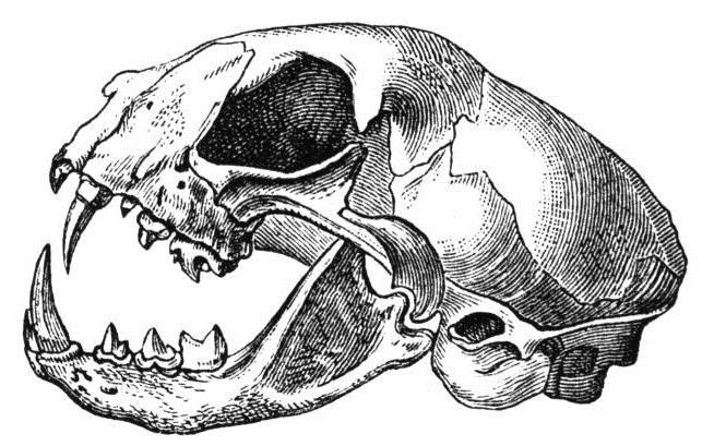 Биология 9 олимпиада череп